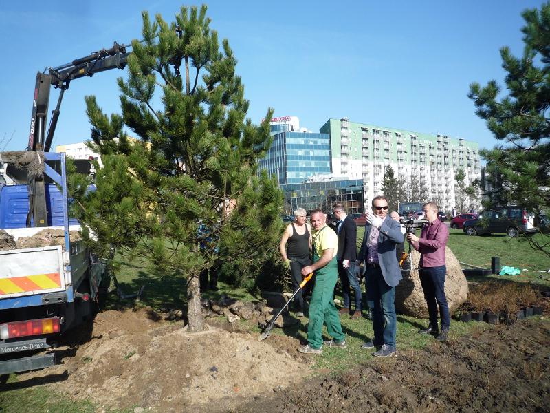 Kraków zyska nowe drzewa i krzewy